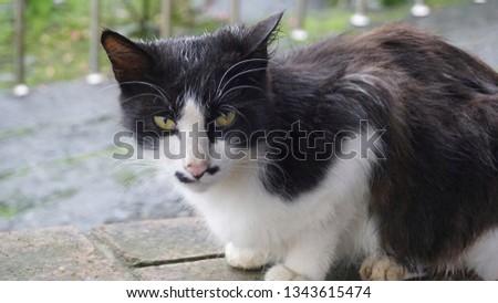 Close up cat #1343615474