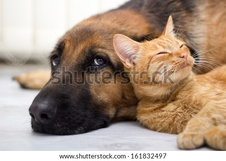 Shutterstock close up, cat and dog together lying on the floor