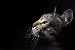 close up cat head with dark background.