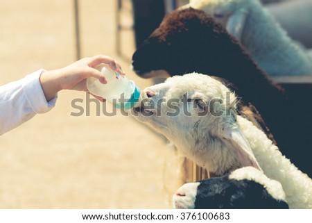 close up child feeding milk...
