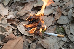 Close up cigarette butt non-smoked carelessly are thrown into dry grass on the ground causing a dangerous forest fire, eclogical cotostrophy through human fault concept