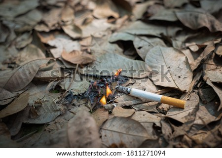 Close up cigarette butt non-smoked carelessly are thrown into dry grass on the ground causing a dangerous forest fire, eclogical cotostrophy through human fault concept Foto stock ©