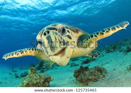 Close up crop of Hawksbill Sea Turtle's face smiling for camera