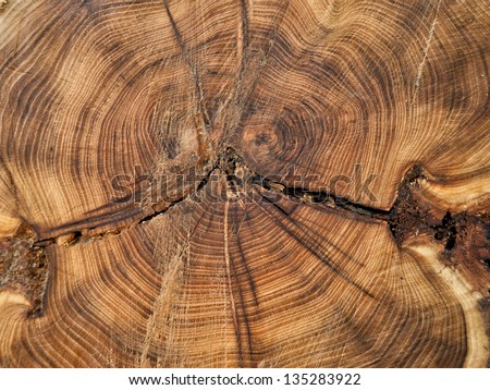 Close up cross section of tree trunk showing growth rings, texture