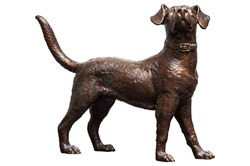 Close up detail and texture of the Bronze dog looked up at the sky isolate on white background with clipping path