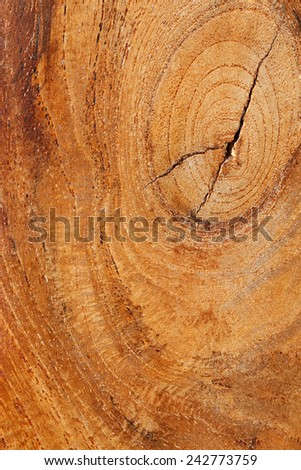 Close up detail view of a textured teak wood background with a golden rich color. Carpentry and organic natural materials and pattern backdrop. Full frame cut of wood.
