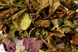 Close up detailed image of  dried colorful Patchouli, Pogostemon cablin, leaves and flowers used for aromatherapy and incense. Member of the mint deadnettle family.