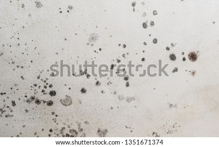 Close up details of black toxic mold spots. Fungus spores and bacteria growing on a white wall. Concept of condensation, damp, water infiltration, high humidity and respiratory problems.