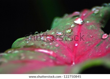 close up dew on the leaves