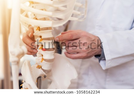 Close up. Doctor in white gown is showing vertebrae on skeleton. Stock photo ©