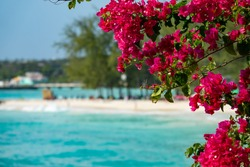 CLOSE UP, DOF: Beautiful red blossoms stretch over the stunning turquoise colored ocean. Lush tropical tree branches full of pink hued blossoms stretches over the gorgeous paradise island shoreline.
