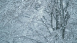 CLOSE UP, DOF: Blurry little snowflakes cover the beautiful avenue on a cold winter morning in Ljubljana, Slovenia. Cinematic shot of a snowstorm engulfing a white park in a flurry of snowflakes.