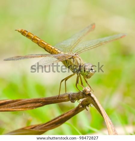 Close up dragonfly.