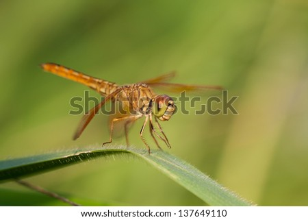 Close up dragonfly in green field background #137649110