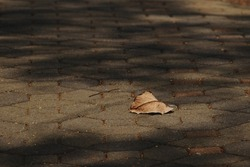 close up dry autumn leaf falling on walkway with shady of tree in the garden