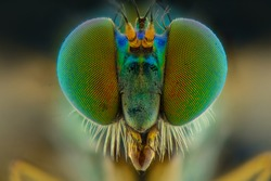 Close up eyes of long-legged flies. Extreme Close-up.