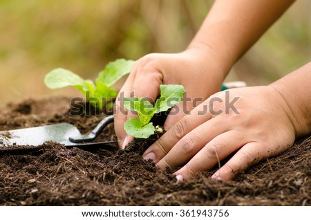 Close up farmer hand planting vegetable for clean food concept