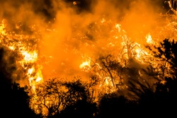 Close Up Fire Flames Embers Burning Brush and Hill in California