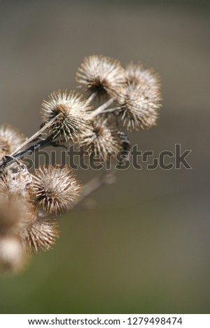 Close up Flowers #1279498474