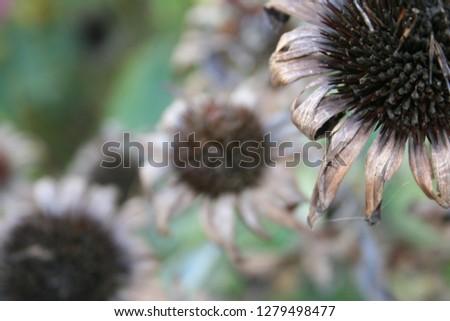 Close up Flowers #1279498477