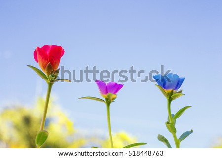 stock photo close up flowers background amazing view of colorful flowers in the garden white flowers red 518448763 - Каталог — Фотообои «Цветы»