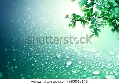 Close up fresh green leaf and rain water drops on the dark blue sponge surface as abstract background