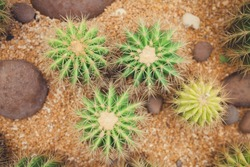 close up from top view of green cactus
