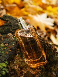 Close up glass bottle of aromatic woody luxury perfume on autumn background. Minimalistic packaging, branding. Woody fragrance. Transparent glass cologne aroma template Vertical view, soft focus. Fall