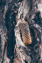 Close up glass bottle of aromatic woody luxury perfume on background of tree bark. Minimalistic packaging, branding. Woody fragrance. Transparent glass cologne aroma template Vertical view, soft focus