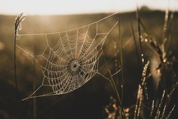 Close-up glowing spider web or cobweb with dew hanging on the grass in the early morning. Golden sunrise shines on spider web and grassland in the background. Focus on cobweb.