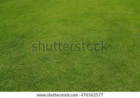 Close-up Grass flat High resolution - Shutterstock ID 476562577
