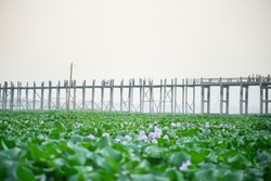 Close up grass with blured U Bein bridge, Myanmar background in the morning time.