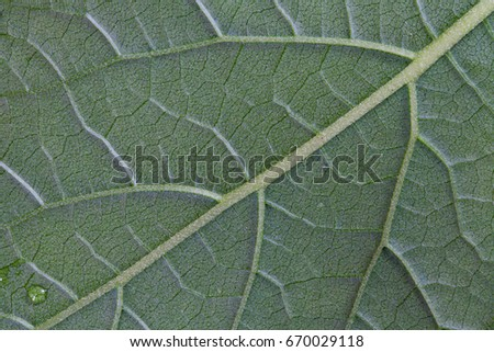 close-up green leaf background texture #670029118