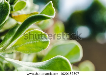 close up green leaf natural in nature, growing of foliage fresh plant spring time,  bright color picture for wallpaper or background environment with copy space - Shutterstock ID 1020157507