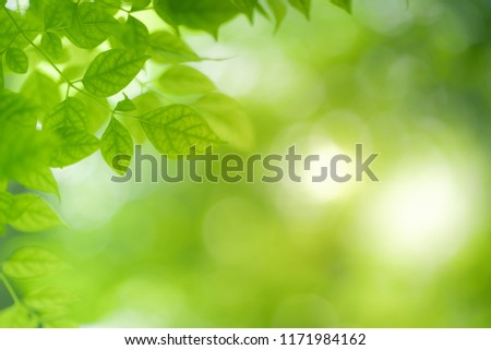 Close-up green leaf nature on blurred greenery background with copy space under sunlight using as a wallpaper