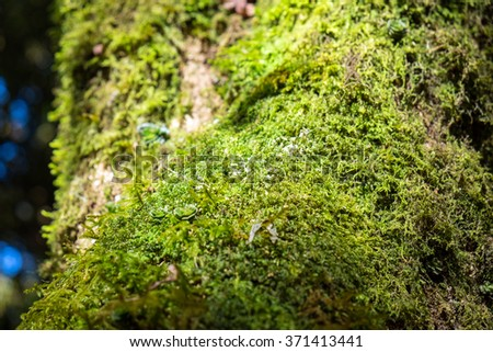 Close up green lichen moss plant grow on wood