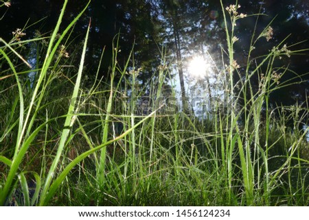 Close-up green young fresh grass on a forest glade against sunlight. Sunlight shines through blades of grass - near Klippitztörl mountain pass, Austrian Alps, Federal State Carinthia, Europe #1456124234