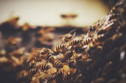 close up group of bees in natural habitat with blurry background