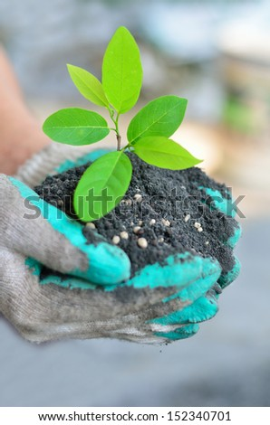 CLose up hand holding tree growing with soil