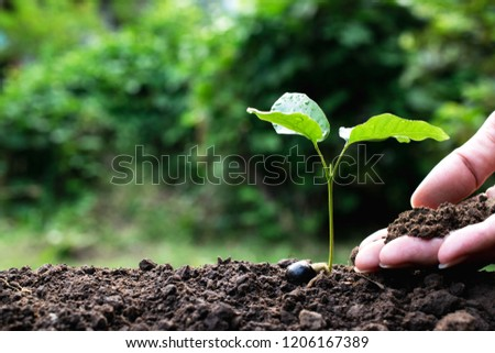 Close up hand of person holding abundance soil to young plant for agriculture or planting peach.