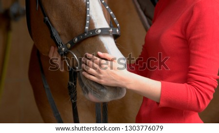 Close up hands of woman hugging a horse. Young girl petting her horse in stable. Equine therapy concept. Love between people and animals.