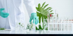 Close up hands with green glove of scientist and piece of plant in beaker that is put on table near stack of test tube in laboratory or classroom.