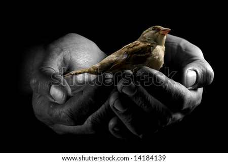 Close-up hands with sparrow over black