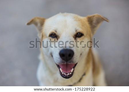 Close Up Happy Dog Smiling