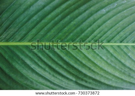 Close up horizontal green leaves pattern texture background. Natural photography