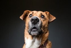 Close-up horizontal portrait of a dog with a miserable expression on its face looking up