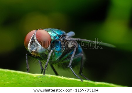 Close up House fly, Fly, House fly on leaf
