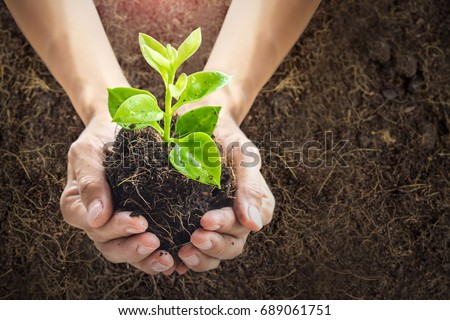 Close up human hands holding a young plant in soil background with sunlight.New life concept. - Shutterstock ID 689061751