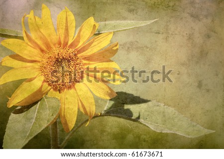 Close up image of a beautiful sunflower in the sunshine antiqued on texture with copy space.