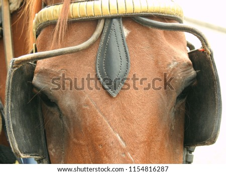 Close up image of a brown horse's head wearing blinkers to shield his eyes.